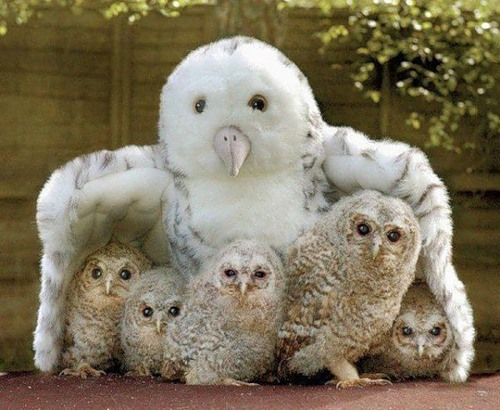 About Owls
