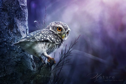Hoot About Owls