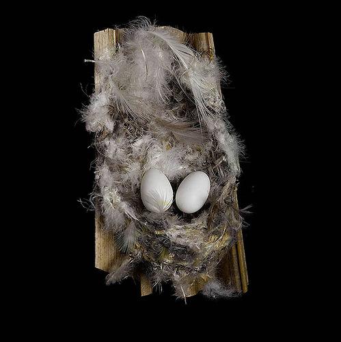 African Palm Swift's Nest
