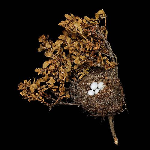 American Goldfinch's Nest