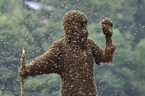 Bee bearding competition in Shaoyang, Hunan Province, China
