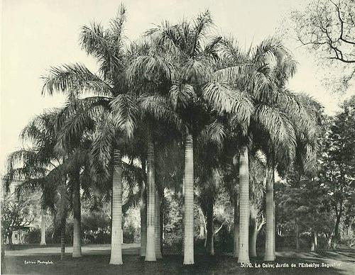 Cairo, Azbakii gardens. Egypt 1870