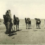 Camels in the desert. Egypt in retro photographs of 1870