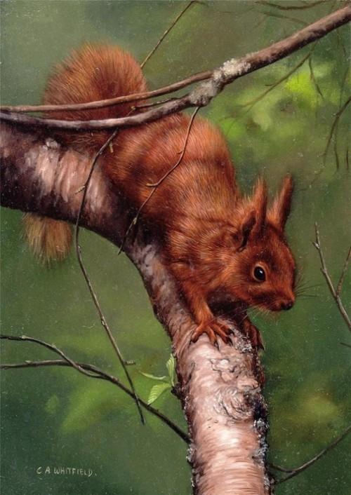British Wildlife Artist Carl Whitfield