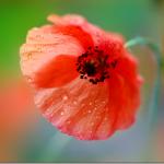 Flower photographer Tatiana Makushina