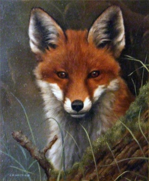 Fox On The Prowl. Painting by English Wildlife artist Carl Whitfield