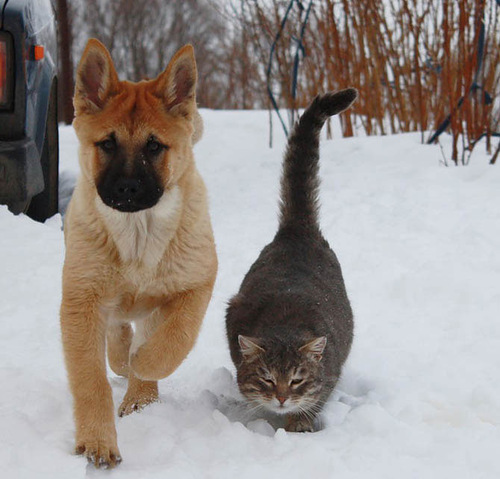 Friends forever Bulka and Platon. Photo by Elena Chaplinskaya, Russia