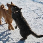 Winter walks of cat Platon and dog Bulka. Photo by Elena Chaplinskaya, Russia