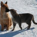 Amazing frindship between cat Platon and dog Bulka. Photo by Elena Chaplinskaya, Russia
