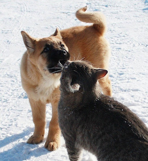Friends forever cat Platon and dog Bulka. Photo by Elena Chaplinskaya, Russia