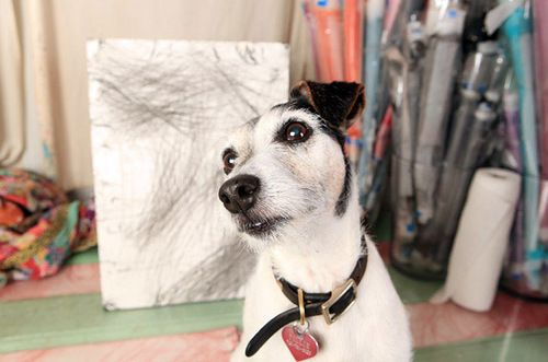 Jack Russell Terrier Tillamook Cheddar. The cost of painting: $ 1000-2150