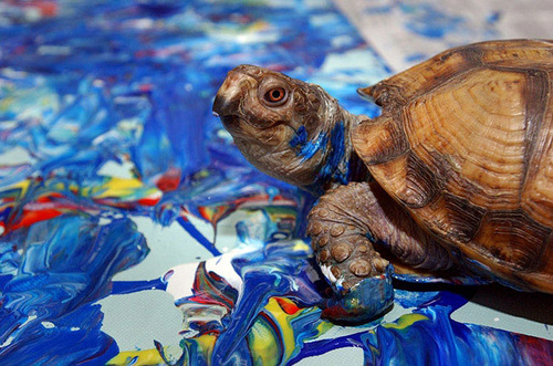 Koopa turtle. Animal painters