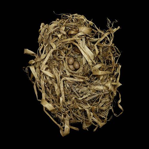 Marsh Wren's Nest