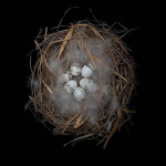 Photography by Sharon Beals. Nests and the Birds that Built Them