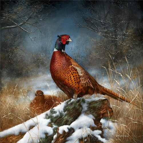 Pheasants In Winter. Painting by English Wildlife artist Carl Whitfield