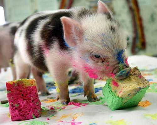 Animal painters