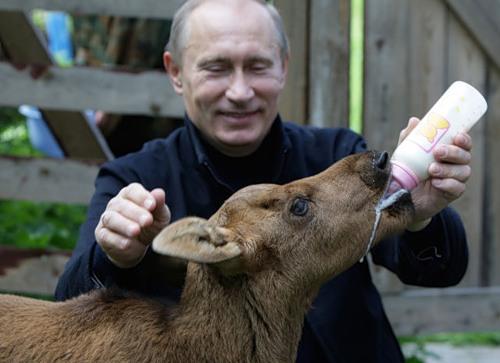 Putin feeding the animal, photo source for painting by Alexei Sergiyenko
