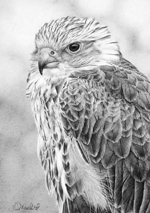 Realistic drawings by Clive Meredith
