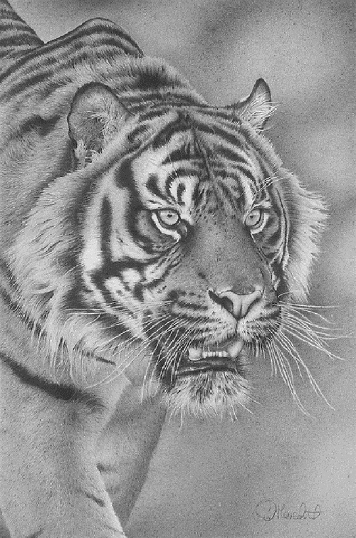 Realistic drawings by British wildlife artist Clive Meredith