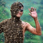Bee bearding contest