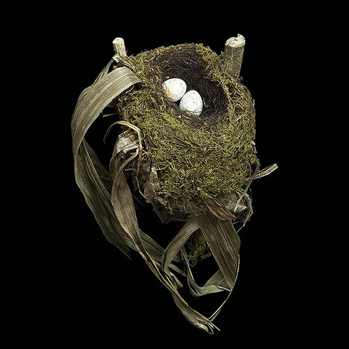 Nests and the Birds that Built Them. Spotted Nightingale's Nest