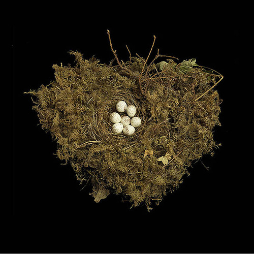 Nests and the Birds that Built Them. Tennessee Warbler's Nest
