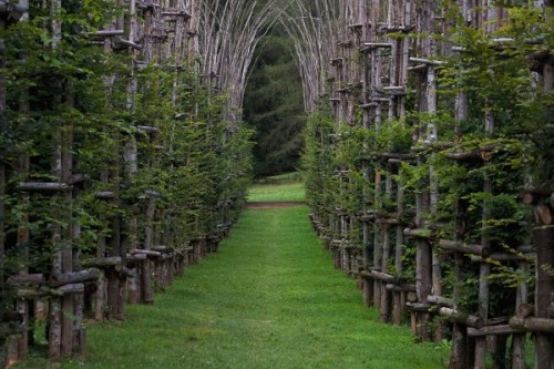 Temple of growing trees in Italy