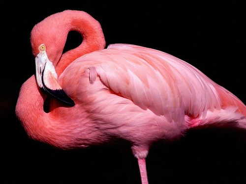 The lake was natural habitat for more than 150 species of local and migratory birds that included Large Flamingo