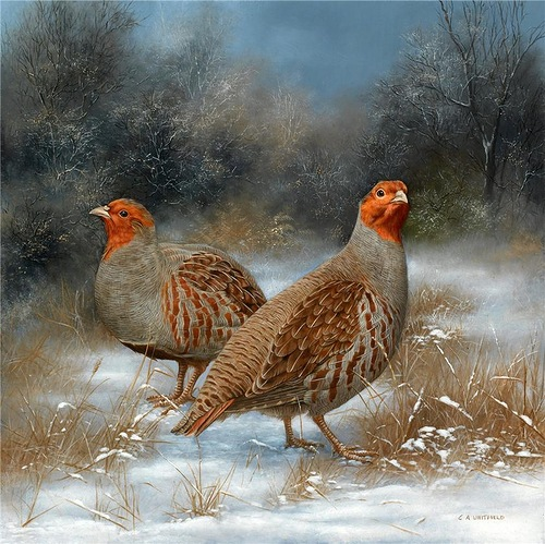 Two Partridge. British Wildlife Artist Carl Whitfield