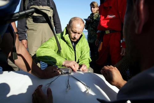 Vladimir Putin saving animals