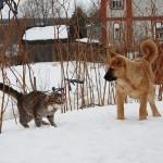 cat Platon and dog Bulka. Photo by Elena Chaplinskaya