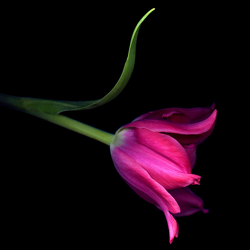 flower photography by Magda Indigo