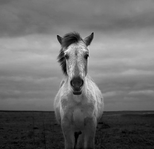 Facts, proverbs and beliefs about Horses