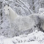 Facts about horses