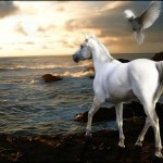 The horse is God's gift to man. Old Arab Proverb