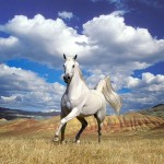 Show me your horse, and I will tell you who you are. Old English saying