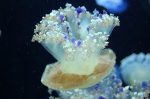 Medusa is another word for jellyfish