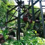 Spreepark PlanterWald in Berlin
