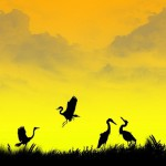 Beautiful colors in silhouette images by Pakistanian photographer Naveed Mughal