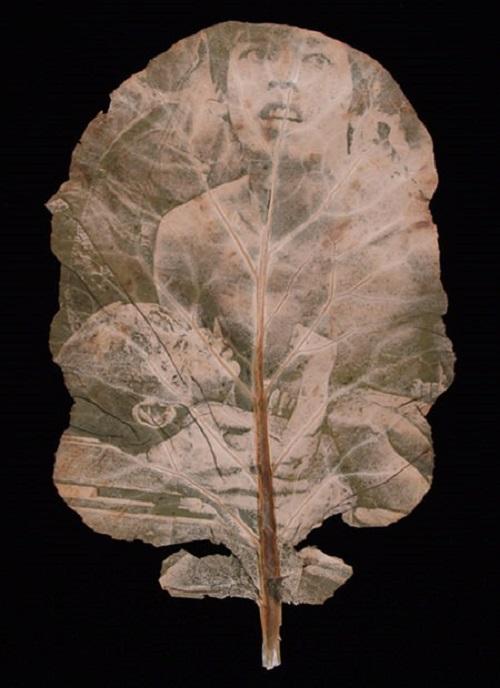 Chlorophyll Prints by Binh Danh