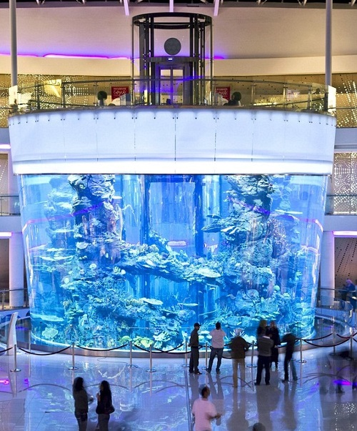 Casablanca Morocco Mall Gigantic aquarium