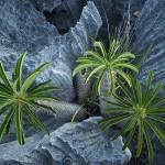 Plants of 'Grand Tsingy', western Madagascar. Photo taken by Explorer and photographer Stephen Alvarez