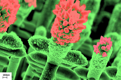 Beautiful Gardens of the nanowires