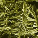 Gardens of beautiful nanoflowers