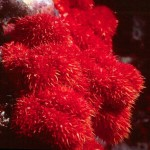 Beautiful red corals
