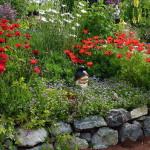 The poppy opes her scarlet purse of dreams. Scharmel Iris