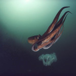 David Dubilet underwater photographer