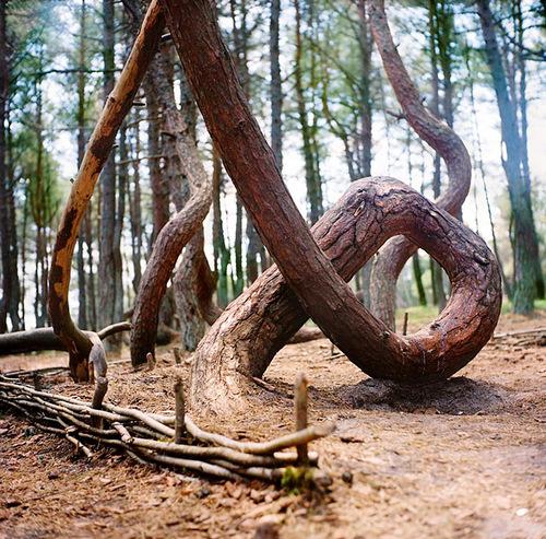 Phenomenon of Dancing wood