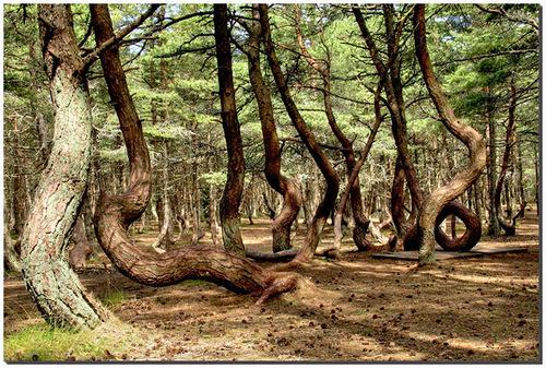Dancing wood