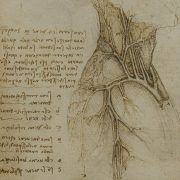 Leonardo Da Vinci Drawing Anatomy
